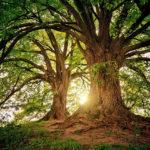 contabilidad de los ecosistemas