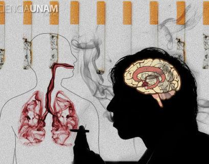 Imagen tomada de Ciencia UNAM