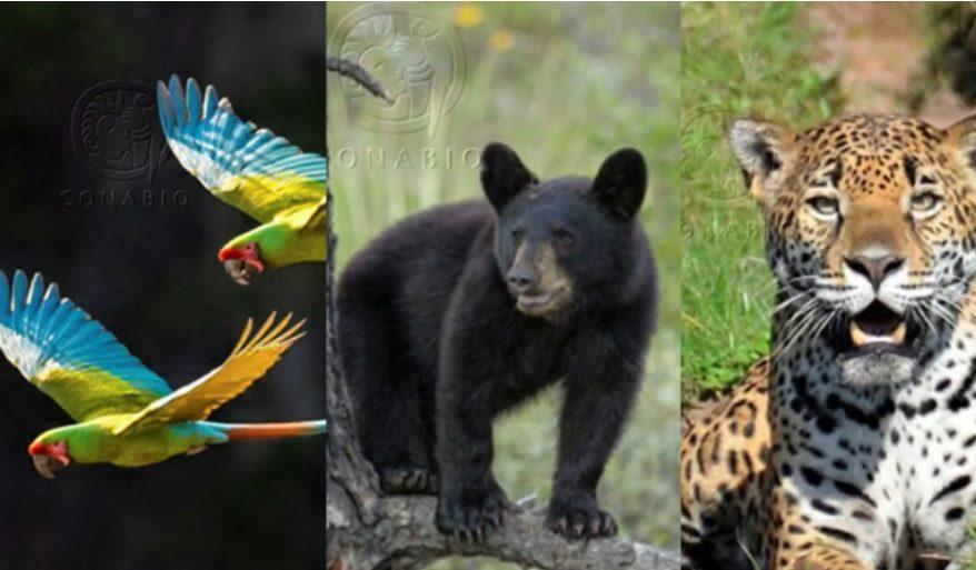 535 especies en peligro de extinción