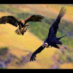 Genocidio: águila y cóndor
